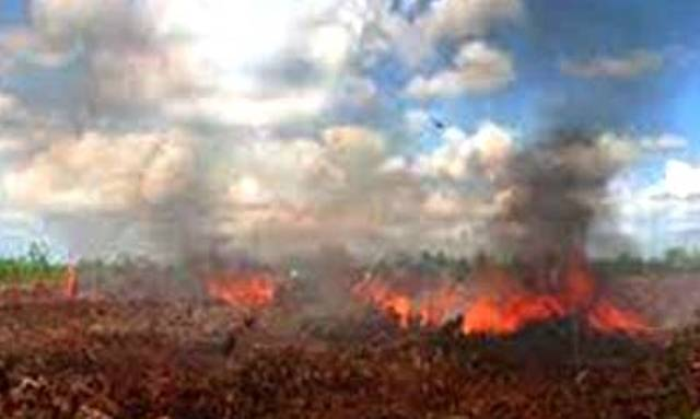 Hutan dan Lahan di Kepenghuluan Teluk Piyai Pesisir-Rokan Hilir Terbakar