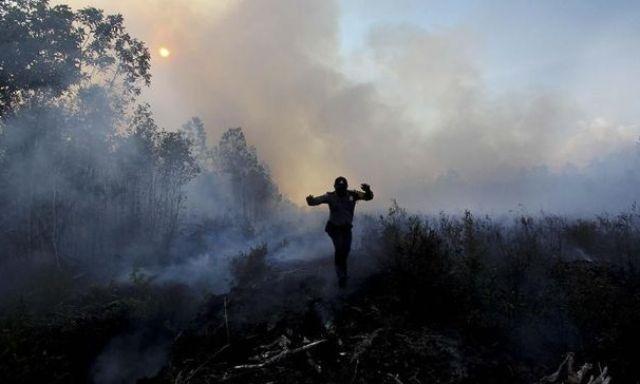 Sejak Januari-13 Fabruari Karhutla di Riau Capai 55,71 Hektare