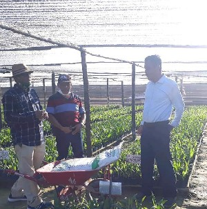 Persiapan Penanaman Perdana PSR, Distan Bengkalis Langsung Cek Bibit Sawit, Idris Mengaku Puas