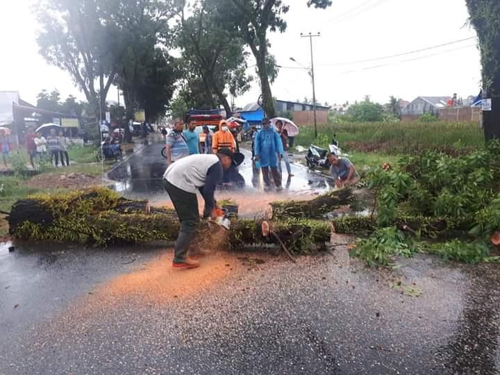 Hujan Deras Disertai Angin Kencang di Kota Padang Tumbangkan 23 Pohon