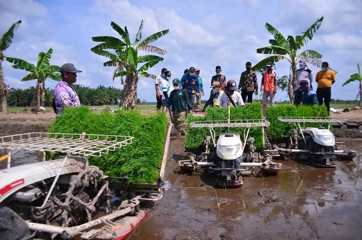 Pemko Pekanbaru Kenalkan Padi Jenis Baru ke Para Petani Bunga Raya Siak