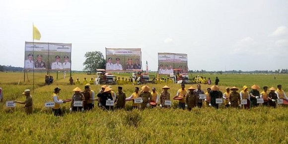 Rohil Menjadi Lumbung Padi Riau, Bupati Suyatno Bangga
