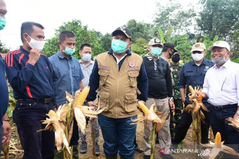 Atasi Ketahanan Pangan Masa Pandemi COVID-19, Kampar Tanam Jagung