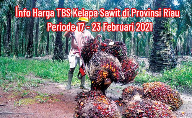Harga TBS Sawit Riau Periode 17-23 Februari 2021 Naik Rp 21,47/Kg