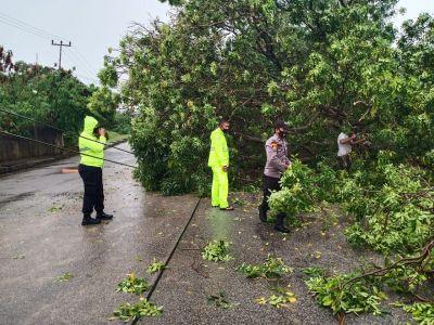 Diterpa Hujan, Sat Sabhara Polres Karimun Bersihkan Pohon Tumbang Akibat  Hujan Deras