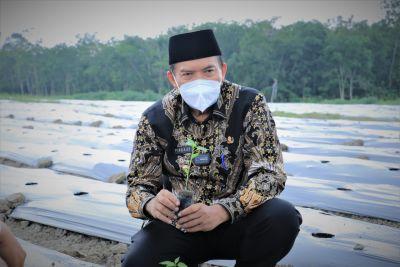 Kendalikan Inflasi Daerah Kota Pekanbaru, PT SPP dan Wako On Farm Cabai 10 Hektar